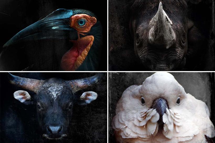 Save_your_animal_3